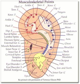 ear reflexology 1